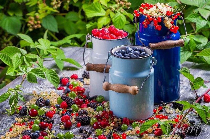Самые популярные ягоды и их названия на английском