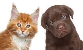 Товары для животных на английском